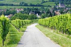 阿尔萨斯du法国途径酒 免版税库存照片