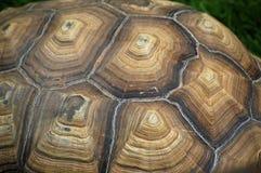 阿尔达布拉环礁大的龟甲细节 免版税库存照片