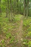 阿巴拉契亚足迹的垂直的看法在蓝岭山脉 库存照片