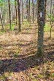 阿巴拉契亚足迹的秋天视图 免版税库存图片