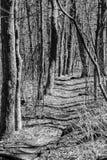 阿巴拉契亚足迹的黑白图象 库存照片