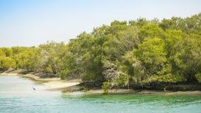 阿布扎比美洲红树 免版税库存照片
