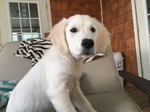 阿帕我的盛大小狗 库存照片