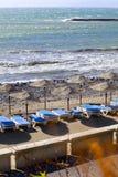阿德赫黄雀色肋前缘fanabe海岛playa西班牙tenerife 免版税库存图片