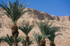阿拉伯中东风景视图 在美丽的峡谷形成En Gedy的高palmtree,在死海岸的全国Judean沙漠  库存图片