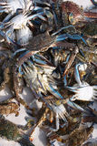 阿拉伯人活螃蟹的海湾 免版税图库摄影
