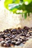 100%阿拉伯咖啡 免版税库存照片