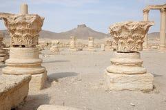 阿拉伯城堡城市小山扇叶树头榈 库存图片