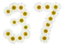 阿拉伯数字37,三十七,从春黄菊白花  库存照片