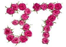 阿拉伯数字37,三十七,从红色花上升了, isola 免版税库存图片