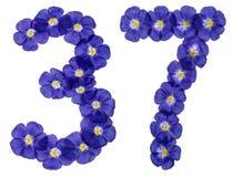 阿拉伯数字37,三十七,从胡麻蓝色花, isol 图库摄影
