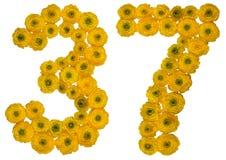 阿拉伯数字37,三十七,从buttercu黄色花  图库摄影