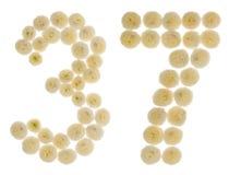 阿拉伯数字37,三十七,从chrysanth奶油色花  免版税库存图片