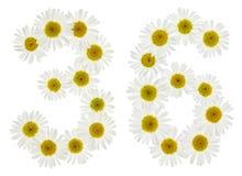 阿拉伯数字36,三十六,从春黄菊白花, 免版税库存图片