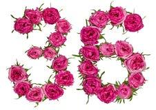 阿拉伯数字36,三十六,从玫瑰红色花,孤立 免版税图库摄影