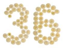 阿拉伯数字36,三十六,从chrysanthem奶油色花  库存照片