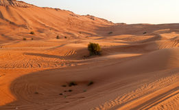 阿拉伯沙漠,迪拜 免版税库存照片