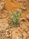 阿拉伯沙漠细节 免版税图库摄影