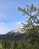 阿拉斯加山风景 库存照片