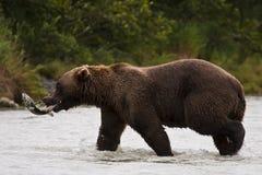 阿拉斯加捕鱼 免版税库存照片