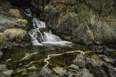 阿拉斯加春天小河 库存图片