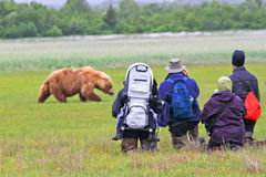 阿拉斯加棕熊查看的组你好海湾 库存照片