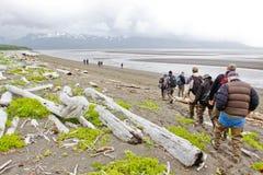 阿拉斯加棕熊查看的组你好海湾 库存图片