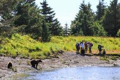 阿拉斯加棕熊观看的银色三文鱼Creek湖克拉克国家公园 库存图片