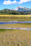 阿拉斯加棕熊跟踪湖克拉克国家公园 免版税库存照片