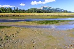 阿拉斯加棕熊跟踪银色三文鱼Creek湖克拉克国家公园 免版税库存图片