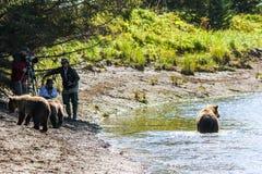 阿拉斯加棕熊Viewing湖克拉克国家公园 免版税库存照片