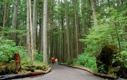 阿拉斯加森林 免版税库存照片