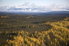 阿拉斯加的五颜六色的森林 库存图片
