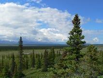 阿拉斯加的寒带草原 免版税库存照片