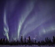 阿拉斯加的极光 免版税库存图片