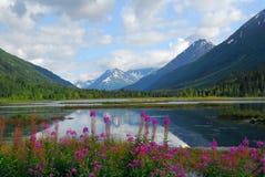 阿拉斯加的横向 库存照片