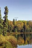 阿拉斯加的湖在秋天 免版税库存照片