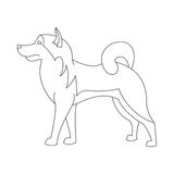 阿拉斯加的爱斯基摩狗线 免版税库存图片