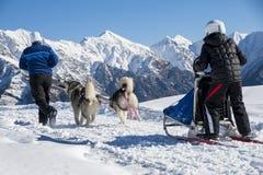 阿拉斯加的爱斯基摩狗 库存图片