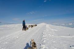 阿拉斯加的爱斯基摩狗sleddog在阿尔卑斯 由山峰决定 免版税库存图片