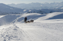 阿拉斯加的爱斯基摩狗sleddog在阿尔卑斯 Nockberge-longtrail 库存照片