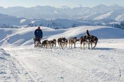 阿拉斯加的爱斯基摩狗sleddog在阿尔卑斯 Nockberge-longtrail 免版税库存图片