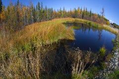 阿拉斯加的秋天本质 森林公路、色的山和蓝天与云彩 免版税库存照片