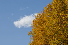 阿拉斯加的秋天本质 森林公路、色的山和蓝天与云彩 免版税库存图片