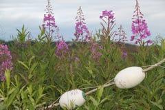 阿拉斯加的野草 免版税库存照片