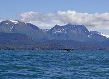 阿拉斯加的驼背风景尾标视图鲸鱼 库存照片