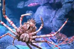 阿拉斯加螃蟹国王 库存图片