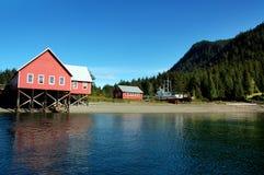 阿拉斯加风景 图库摄影