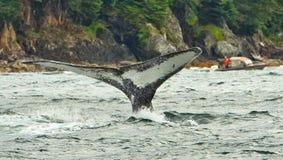 阿拉斯加驼背鲸火焰潜水2 免版税库存图片