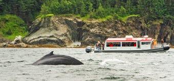 阿拉斯加-小船驼背鲸注意 库存照片